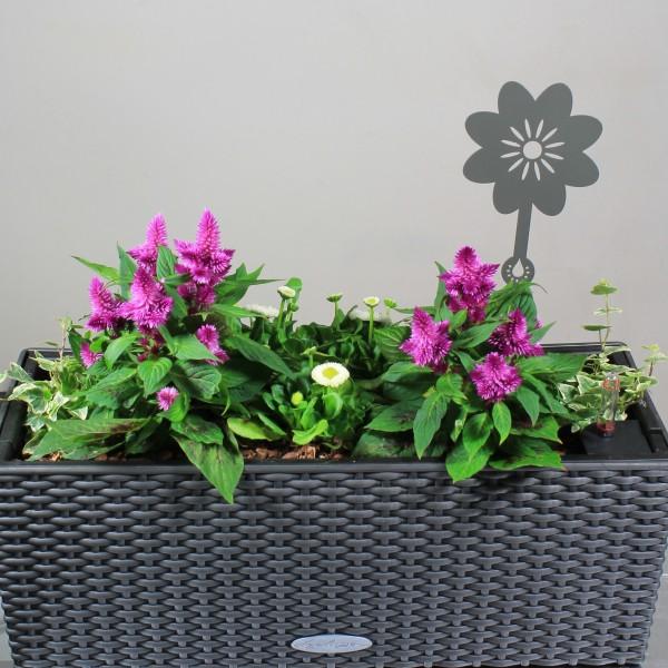 jardiniere-ranelagh