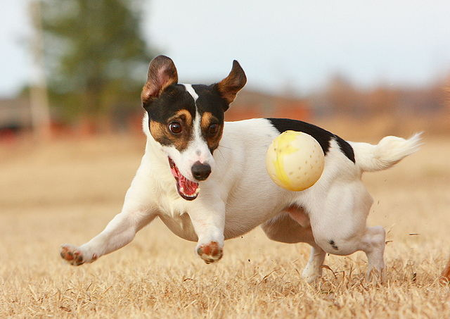 640px-JRT_with_Ball
