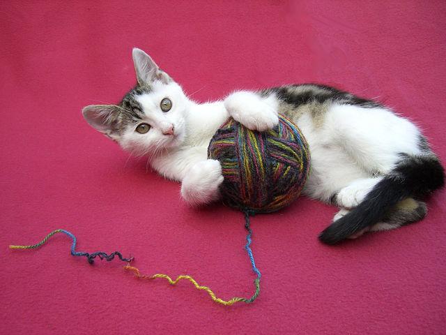 Un chat qui joue avec une pelote de laine