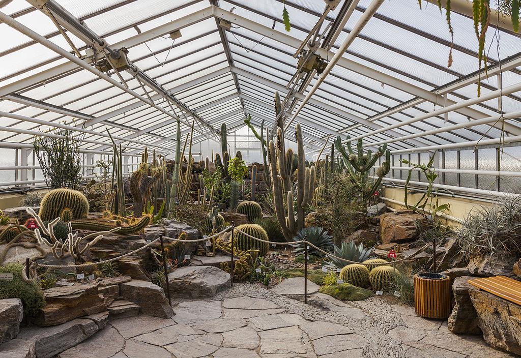 Une partie de la grande famille des cactus