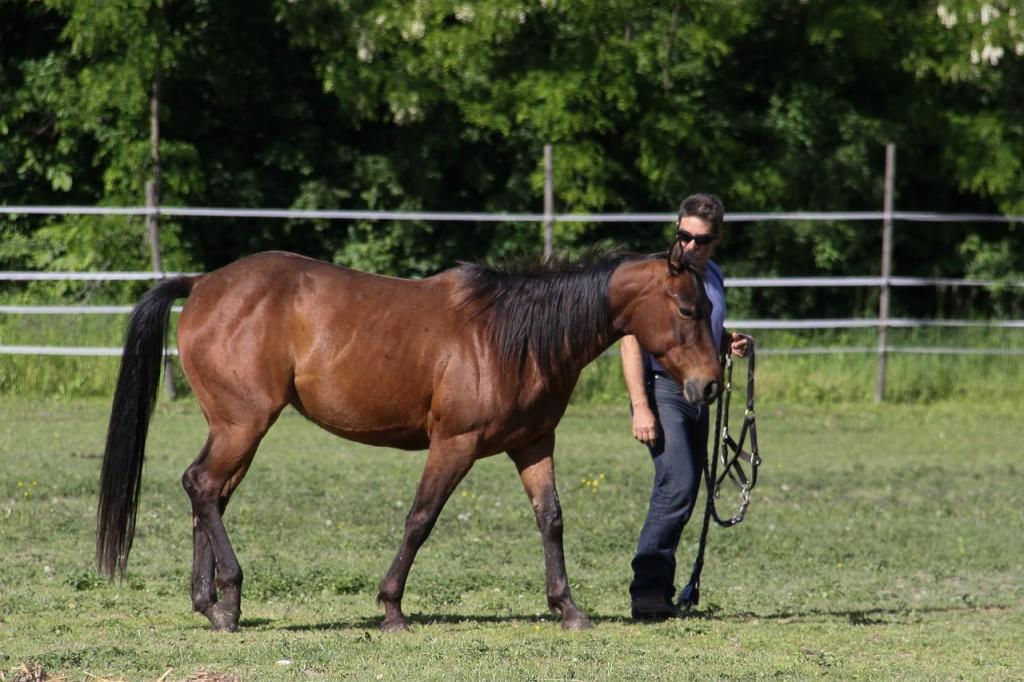 horse-587015_1280