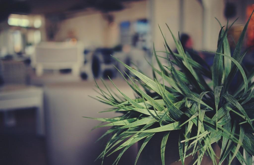 plant-698637_1920