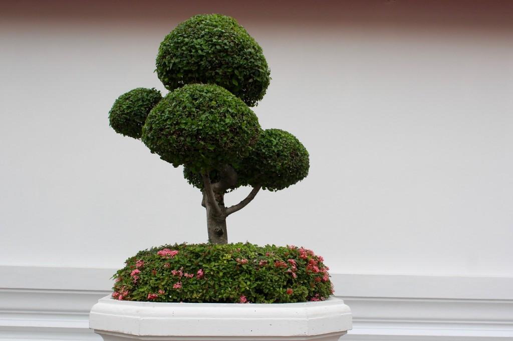 bonsai 1171555_1280