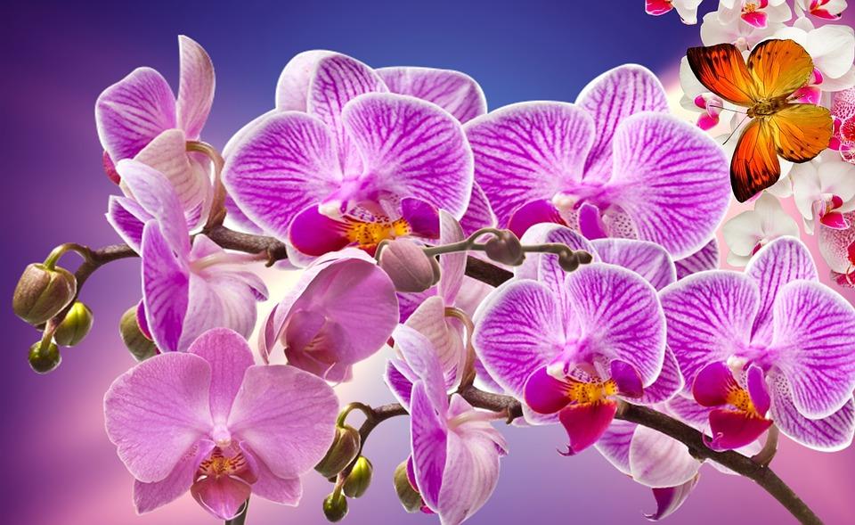 orchids-866580_960_720