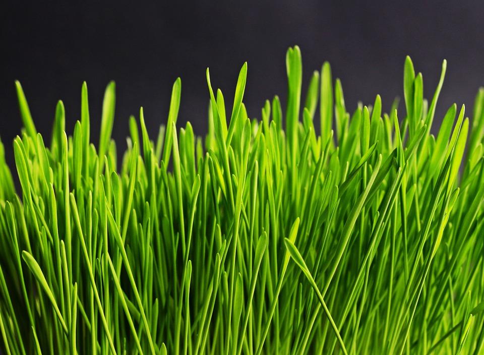 grass-534873_960_720