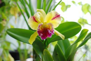 orchid-1130546_960_720