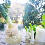 faire repousser les restes de légumes