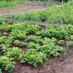 Préparer le jardin potager