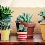 Les plantes grasses les plus en vogue